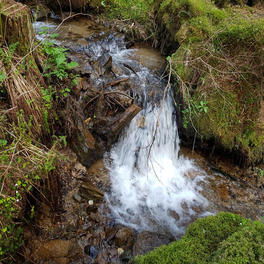 Ein kleiner Wasserfall in einem Gebirgsbach. Rundum wachsen Moos, Farne und Gräser.