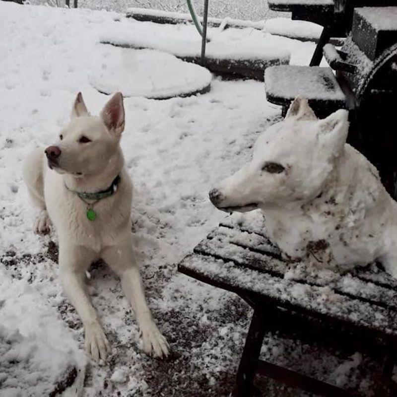 Ein weisser Hund liegt im Schnee. Neben ihm ein identischer Hundekopf aus Schnee.