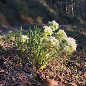 Eine Gruppe von Blumen neben dem Waldweg.