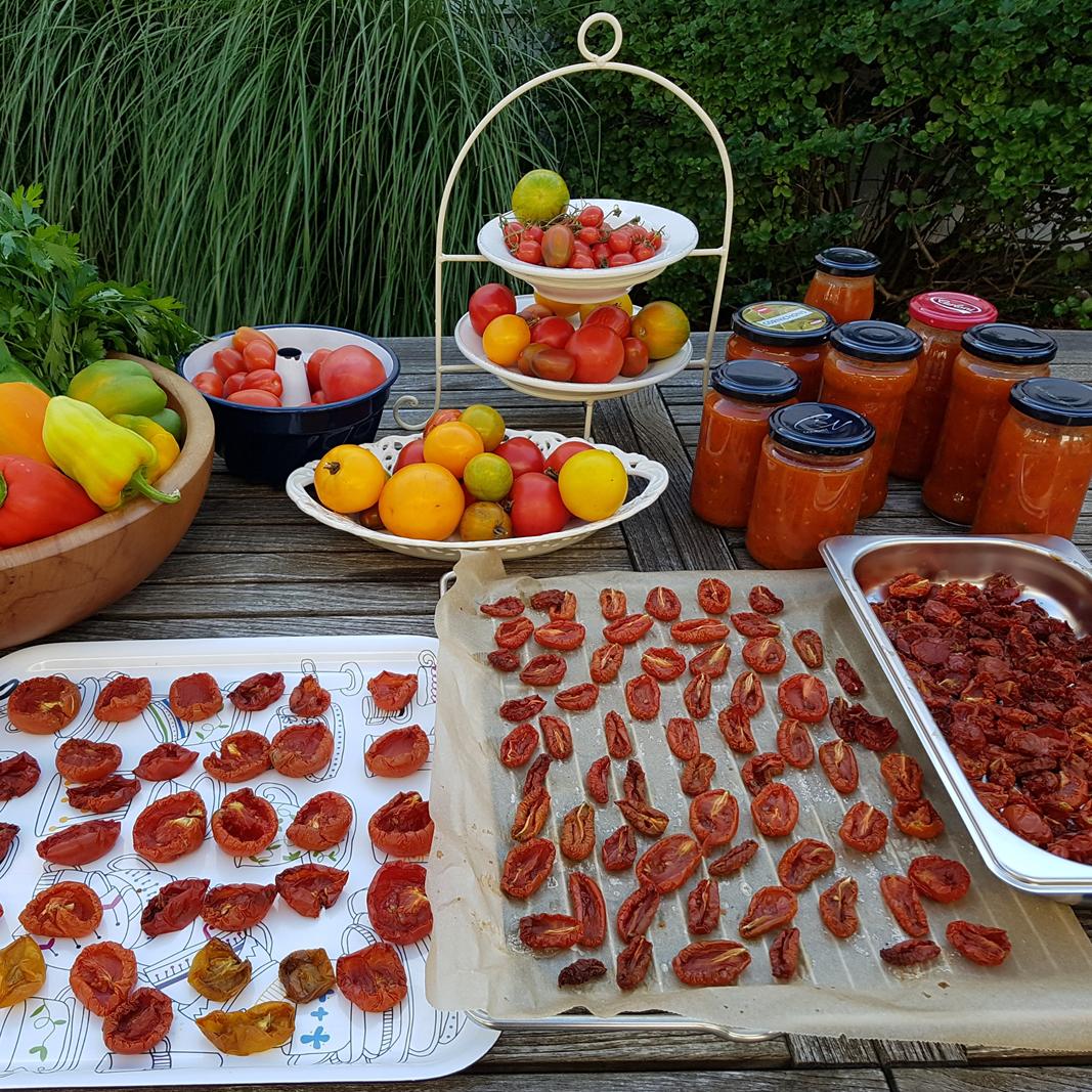 Die Ernte im August, Paradeiser lassen sich trocknen und zu Saucen verarbeiten.